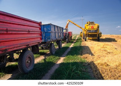 Harvester combine, tractor and trailers during wheat harvest on sunny summer day.