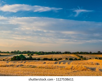 Harvester farm fields in Suffolk uk with golden evening sunshine and yellow fields