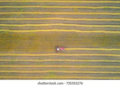 Harvester in the field. Aerial photography autumn harvest