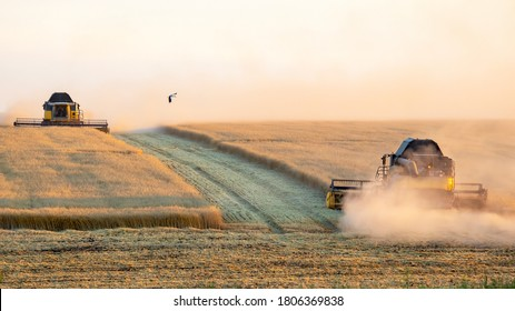 The harvester is harvesting wheat in the field. grain preparation. agronomy and agriculture. - Shutterstock ID 1806369838