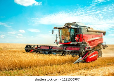 harvester harvests wheat on the field