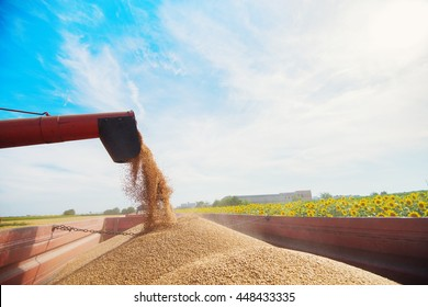 Harvester loading crops into a trailer.