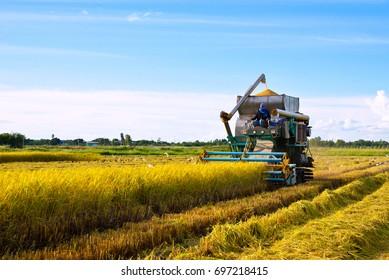Harvester machine to harvest rice field working in Thailand