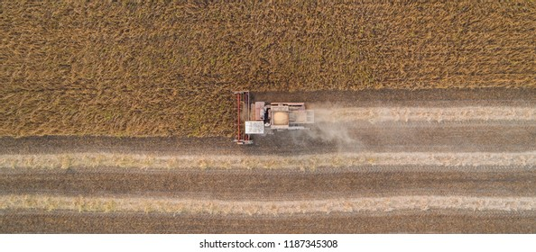 Harvester machine working in field . Combine harvester agriculture machine harvesting golden ripe wheat field. Aerial view. From above.