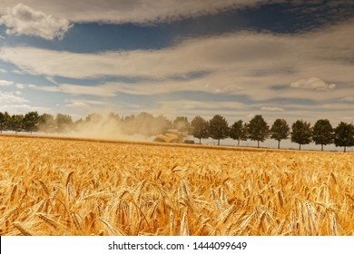 harvester makes its job and reap corn