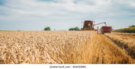 Harvester on the field loading crops.