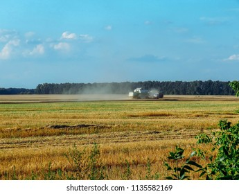 Harvester removes wheat on the field
