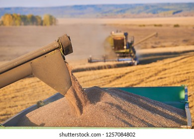 Harvester unloading wheat. Combine harvester in action on wheat field. a cornfield with wheat at harvest. a combine harvester at work.  Harvester machine to harvest wheat field working.