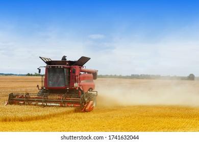 Harvester arbeitet während der Erntezeit auf den Bauernfeldern, die Maschine schneidet Getreidepflanzen an sonnigen Tagen, Landwirtschaftskonzept