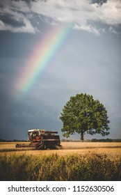 Harvester working in the fields in front of rainy sky and rainbow.