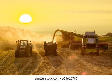 harvesting combine harvesting golden ripe wheat field  in light of the setting sun in Germany