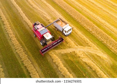 Harvesting. Combine harvester pours grain into truck view from above. Autumn agricultural background.