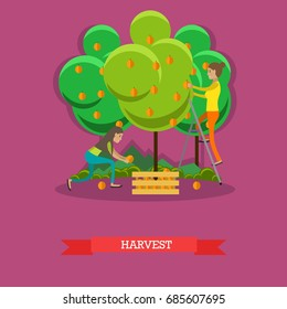 Harvesting concept illustration in flat style. Gardeners women picking peaches and putting them into wooden box.