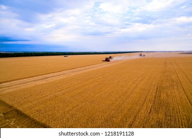 Harvesting corn  Aerial top view fields. Harvester machine working in field . Combine harvester agriculture machine harvesting golden ripe wheat field. Agriculture. Aerial view. Drone photography