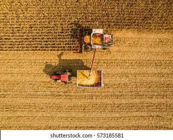 Harvesting corn in autumn Aerial top view