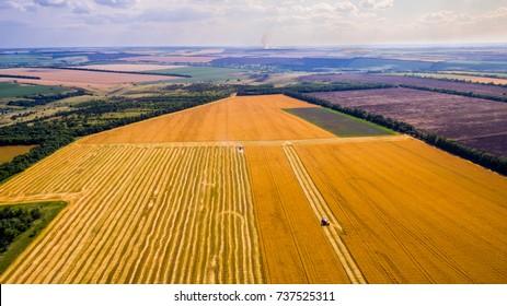 Harvesting corn in autumn Aerial top view fields. Harvester machine working in field . Combine harvester agriculture machine harvesting golden ripe wheat field. Agriculture. Aerial view. From above.