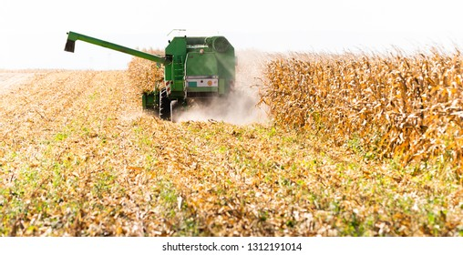 Harvesting of corn fields with combine