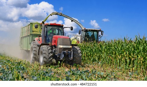 Harvesting of corn silage in the field