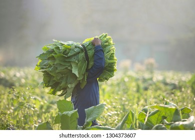 Tobacco India Images, Stock Photos & Vectors   Shutterstock