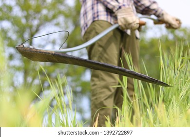to harvesting a field with old scythe