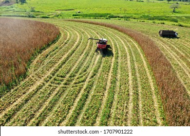 Harvesting  machine operating on corn field. Agro business. Great landscape.