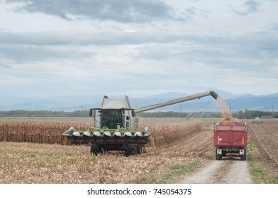 harvesting of maize grain on cloudy sky background