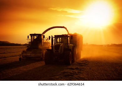 harvesting on sunset light