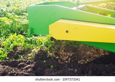 harvesting potato on the field. The mechanism of potato harvesting. tractor plow to dig potatoes. plowing land, agriculture, farming, vegetables, agro-industry, manual labor, close-up