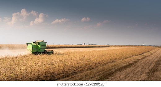 Harvesting of soy bean  fields with combine