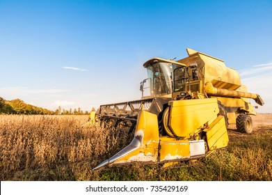 Harvesting of soybean field with combine harvester. Yellow thresher.