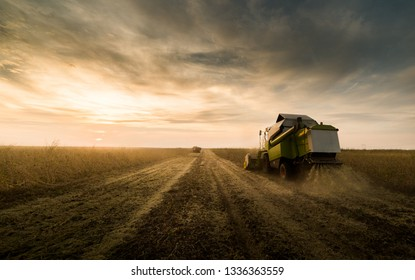 Harvesting of soybean field in sunset