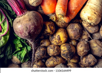 Harvesting vegetables on a pile. Potatoes, carrots, beets, parsley.