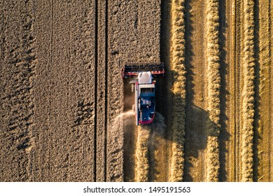 Harvesting wheat, cereals in france