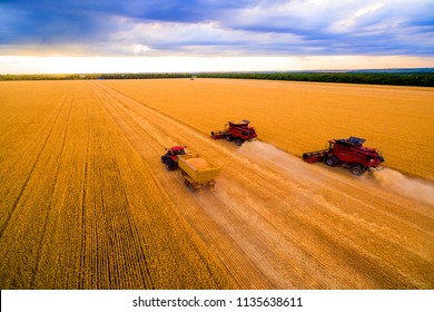 harvesting of wheat. A combine harvester and a tractor drive through the wheat field