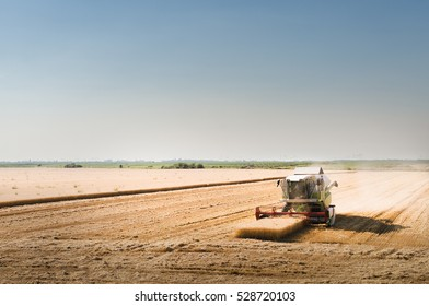 Harvesting of wheat field in summer