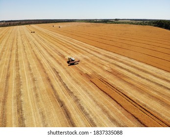 Harvesting wheat in the fields