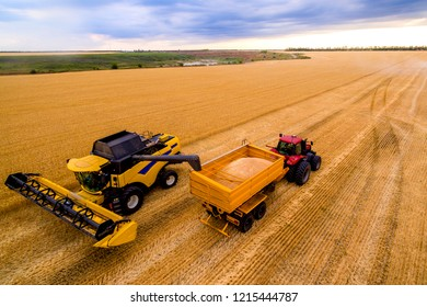 Harvesting wheat. Harvesting machine working in the field. Combine harvester pours wheat into the hopper Top view from the drone