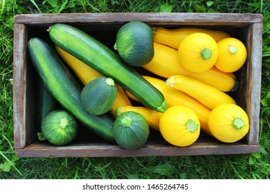 Harvesting zucchini. Fresh squash lying in box. Fresh squash picked from the garden. Organic food concept .