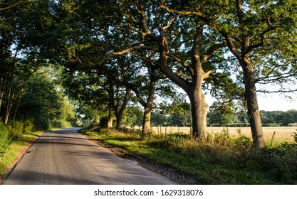 Harvey's Lane, a traditional narrow English country lane, runs through an avenue of trees beside farmland at Little Horsted near Uckfield in East Sussex.
