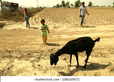 Haryana, India – May 05, 2017 – Young herder with his son and domestic goat in agricultural field outdoors.