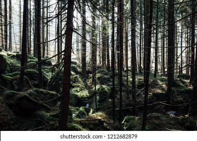 Harz National Park - Upper Harz Forest Landscape
