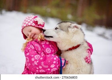 hasky dog licking little girl