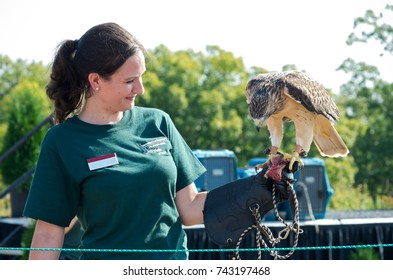 HASTINGS, MN/USA – SEPTEMBER 23, 2017: University of Minnesota Raptor Center Naturalist Kayla Wolfe presents hawk to crowd at Carpenter Nature Center during fall raptor release event in Hastings.