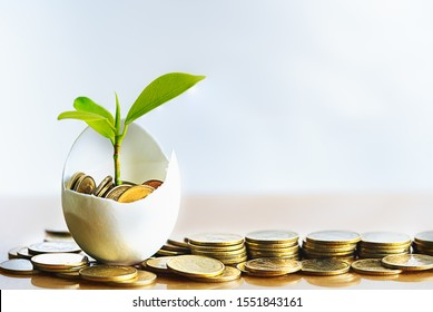 Hatched egg and coins with small plant tree. Pension fund, 401K, Strategies and plan for passive income. Saving money and investment. Risk management for business growth. Manage money in retirement.