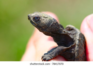 Tiny Turtle Images, Stock Photos & Vectors | Shutterstock