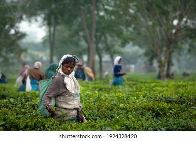 HATIKHULI, ASSAM, INDIA - DECEMBER 6, 2007 : Portrait of woman picker of Assam tea garden in lowland of Brahmaputra River Valley.