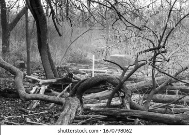 Haunted Foggy Forest with a Cross in Black and White
