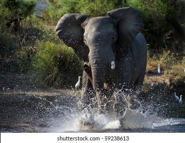 Have angered. The river Zambezi. Zambia. Africa