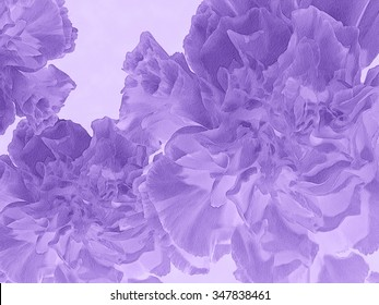 I have manipulated one of my floral photos of a single bloom to create a series of compositions featuring this beautiful, lush Dianthus Carnation.