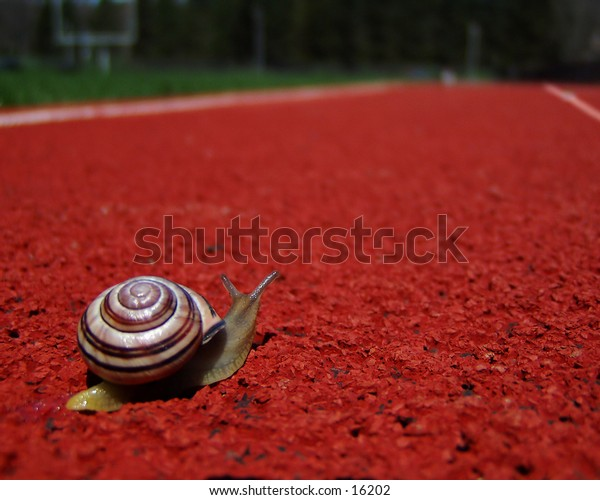 I have pet snails - lots of them!  This one decided he wanted to run track when he got to high school.  We took him out for a lesson in perspective.